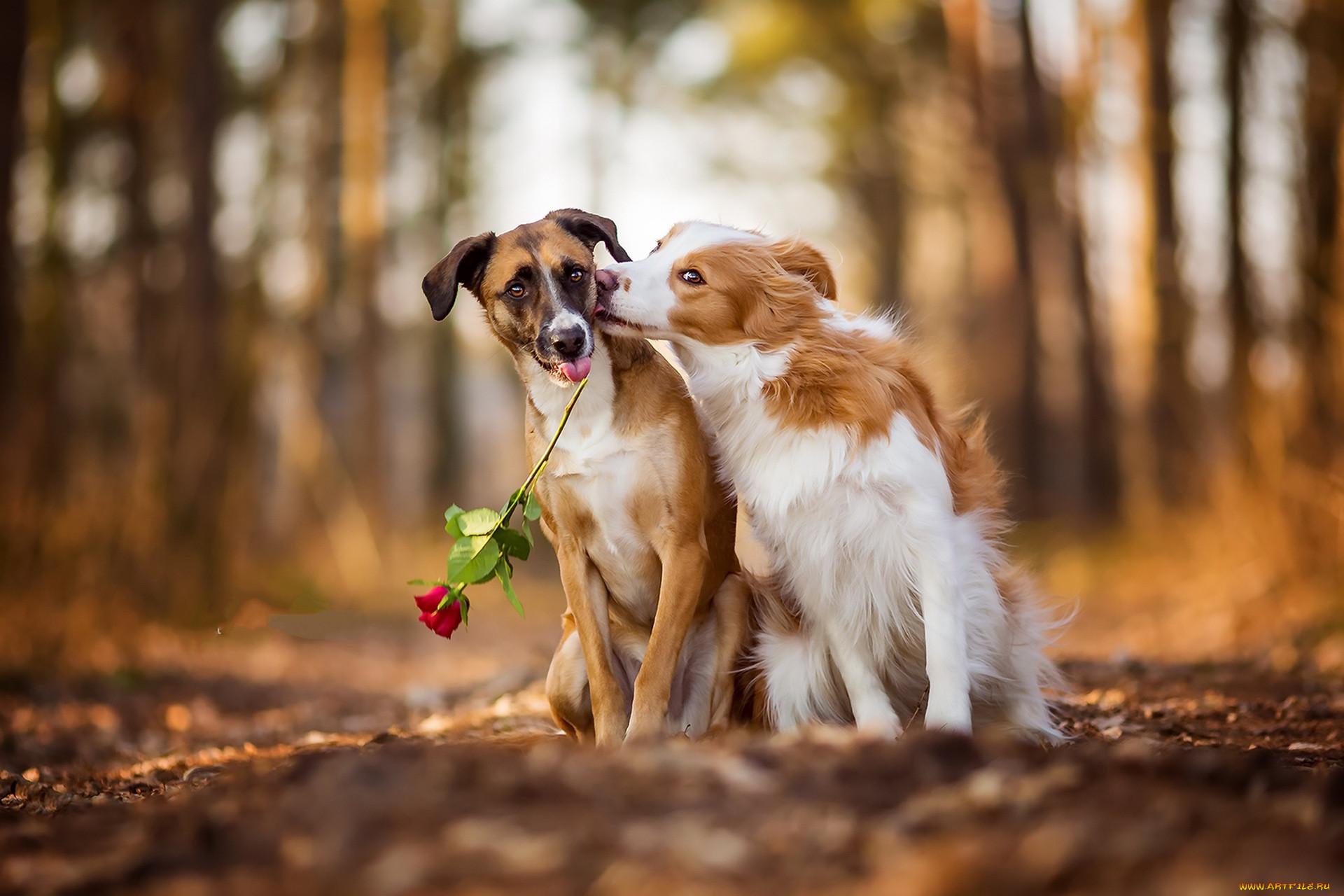 вас собаки пара фото купить блинкоины можно